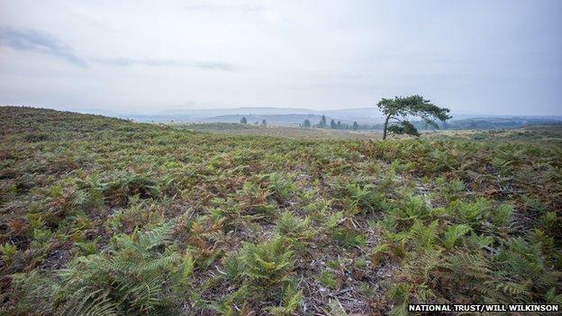 BBC News - National Trust buys Thomas Hardy Dorset heathland