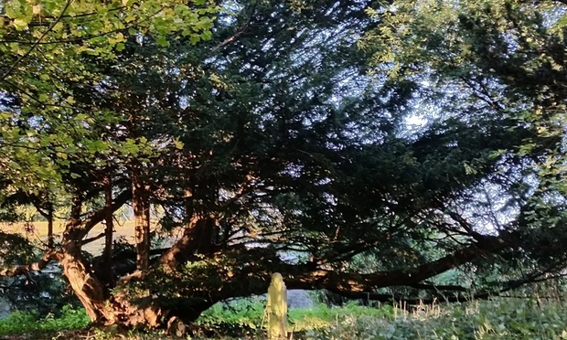 Yew sets ancient tone of burial ground